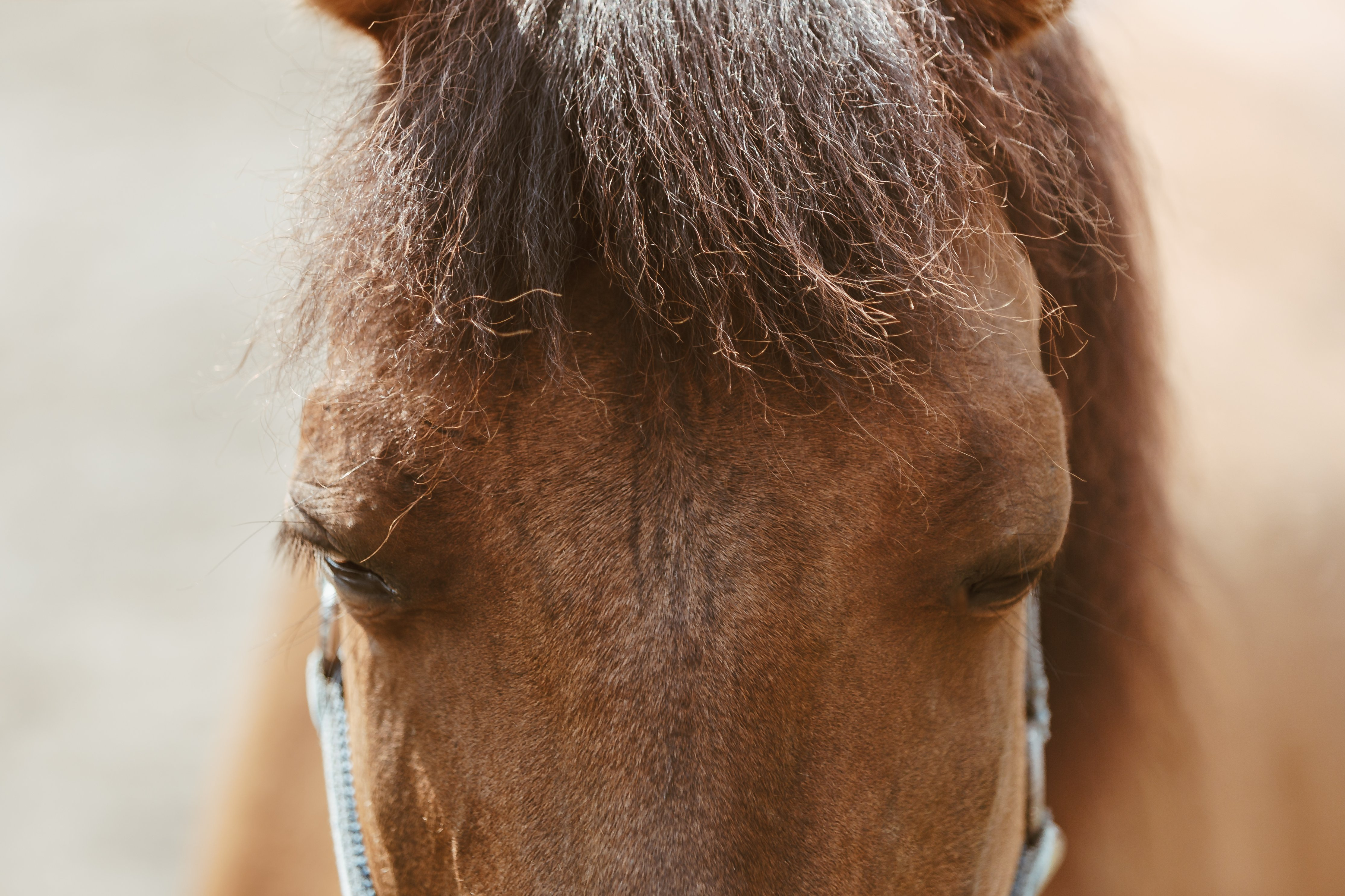 long-horse-face